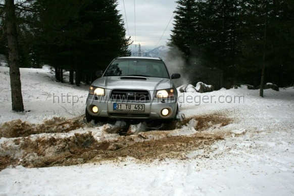 forester6